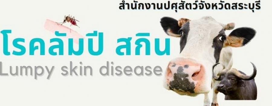 โรคลัมปี สกิน Lumpy Skin disease